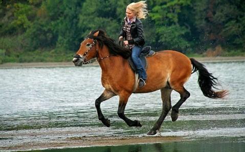 Equestrian Club Kavalkada